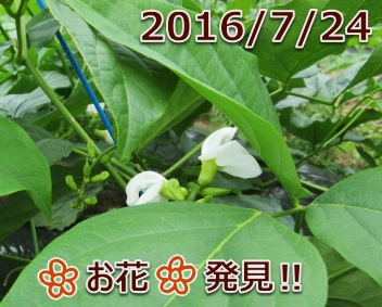 2016/7/24 お花、発見!!