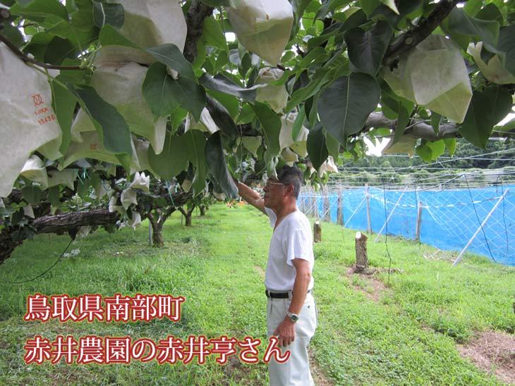 鳥取県南部町 赤井農園の赤井亨さん