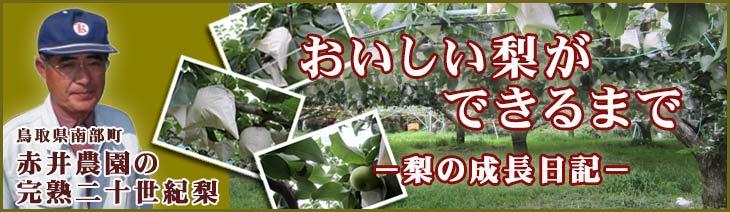 おいしい梨ができるまで〜梨の成長日記〜