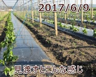 2017/6/9 見渡すとこんな感じ