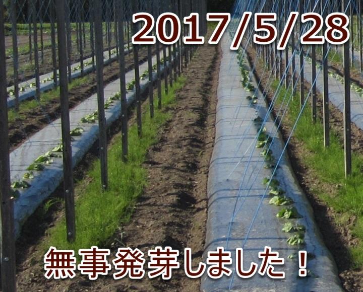 2017/5/28 無事発芽しました!