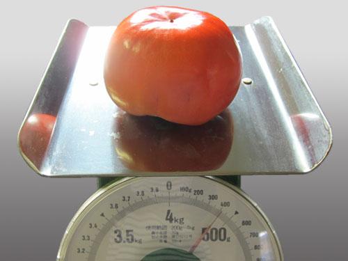久古の富有柿