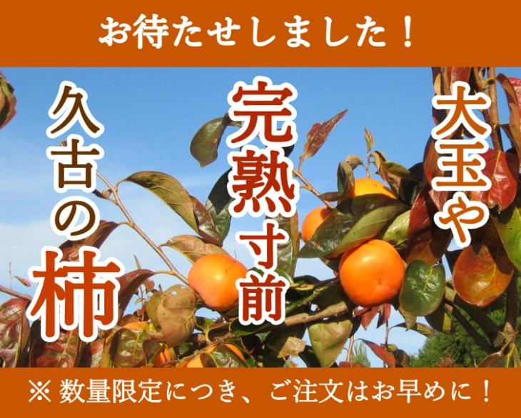 完熟寸前 久古の富有柿