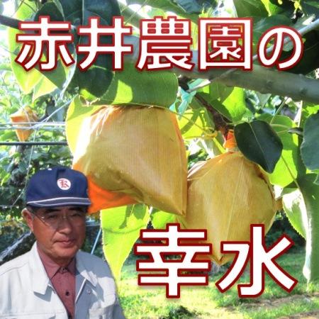 あの【赤井農園】の幸水梨