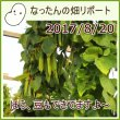 なったんの【大山のなたまめ畑リポート】2017/8/20ほら、豆もできてますよ〜